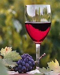 Вино и йогурт: сходства и различия