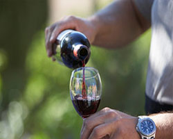 Вино из Апулии