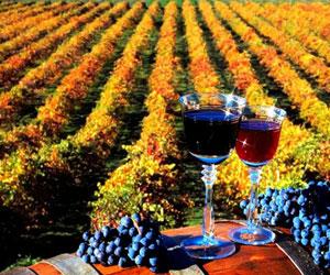 Введение эмбарго на вино из Молдавии в РФ