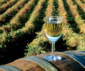 Выбор вина без неправильной информации