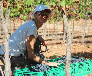 Только сейчас в Израиле производят качественное вино