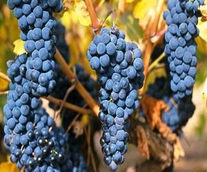 Самое дорогое вино в мире – Aurum Red Serie Oro